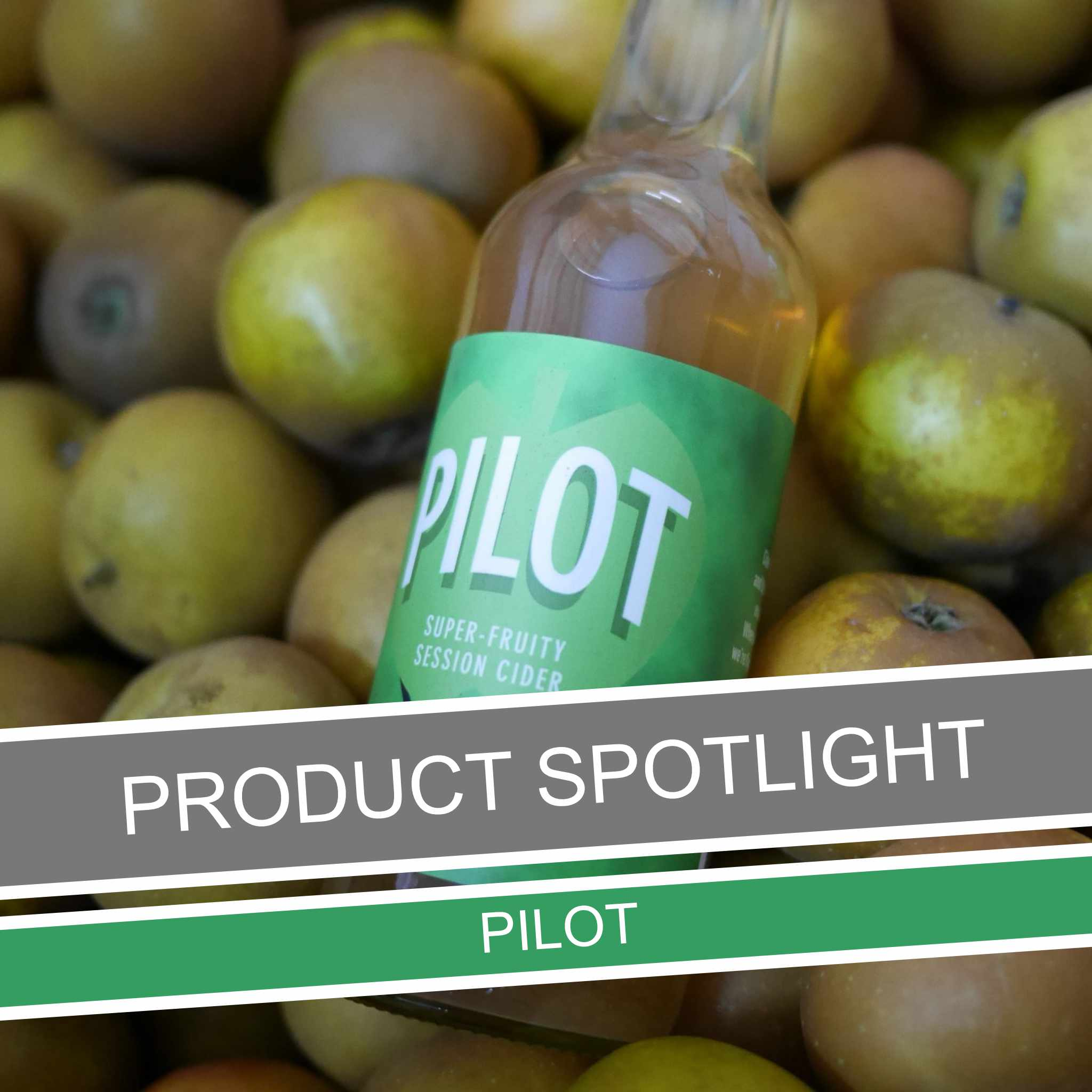 Product Spotlight – Pilot
